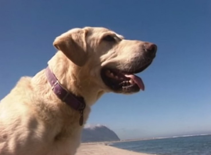 perros_heroicos_6