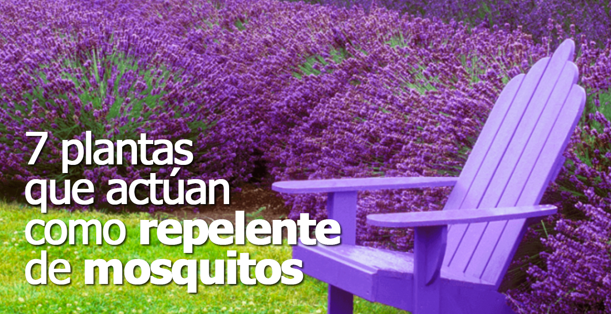 plantas que actuan como repelente de mosquitos