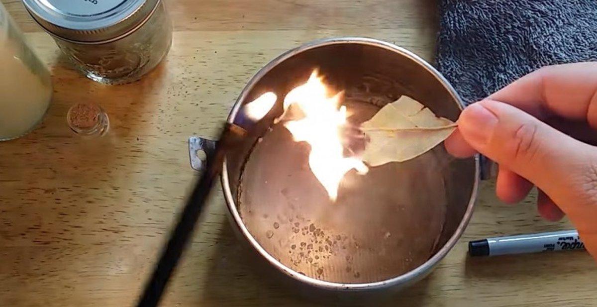Laurel sirve de que para hojas quemar