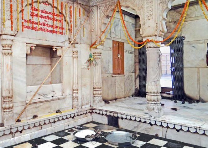 templo ratas 12