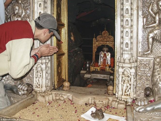 templo ratas 3