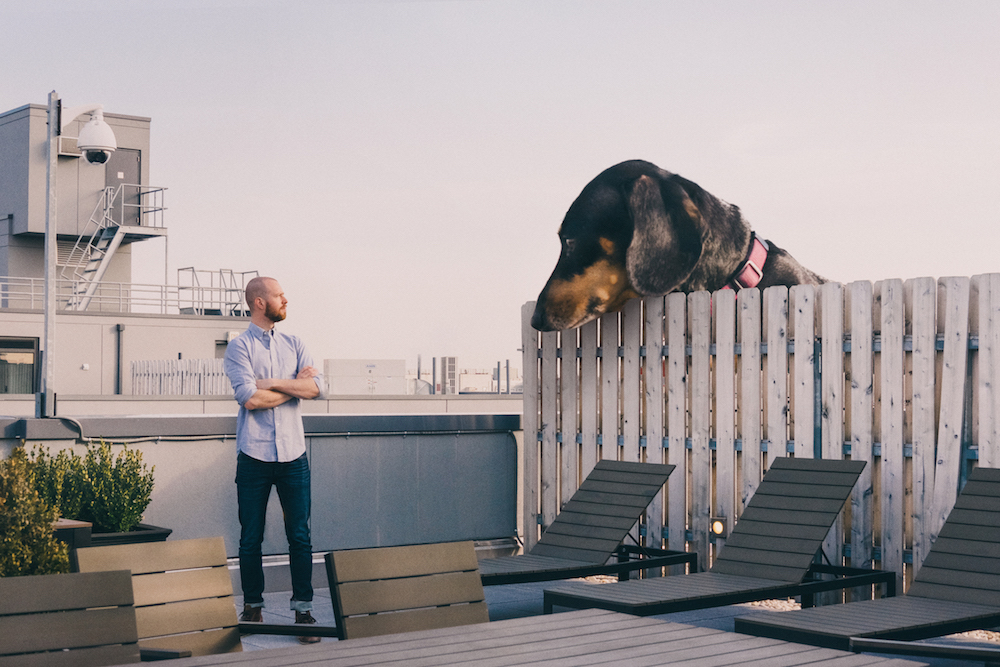 vivian, el perro que parece gigante pero no lo es 1