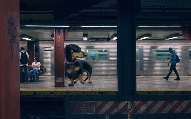 vivian, el perro que parece gigante pero no lo es 11
