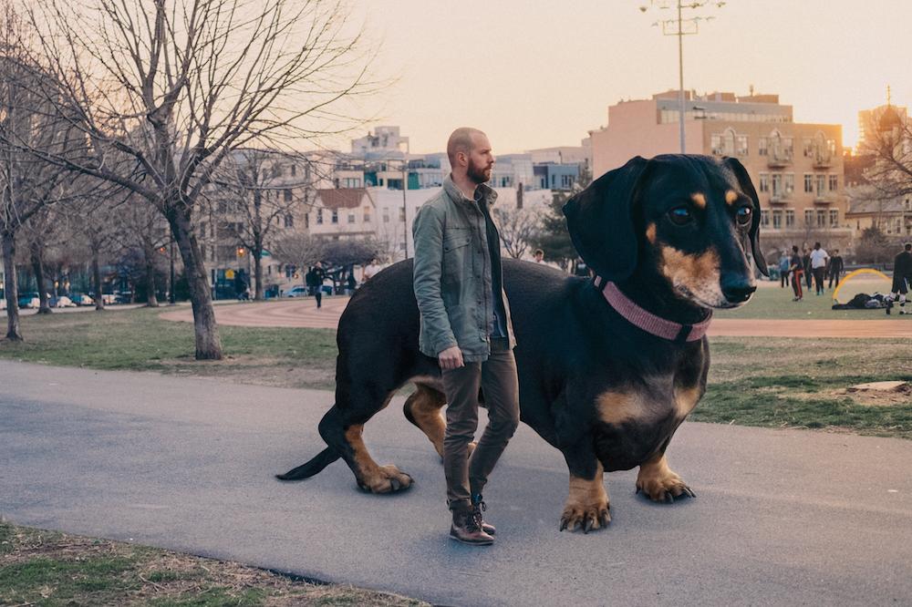 vivian, el perro que parece gigante pero no lo es 3