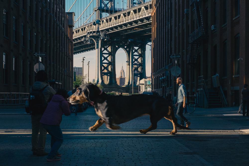 vivian, el perro que parece gigante pero no lo es 5