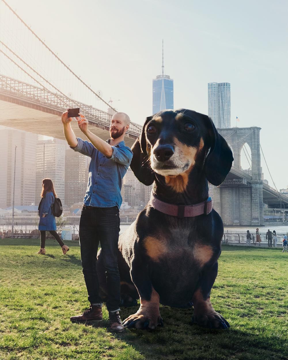 vivian, el perro que parece gigante pero no lo es 6