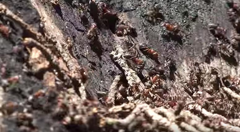 combatir-hormigas10