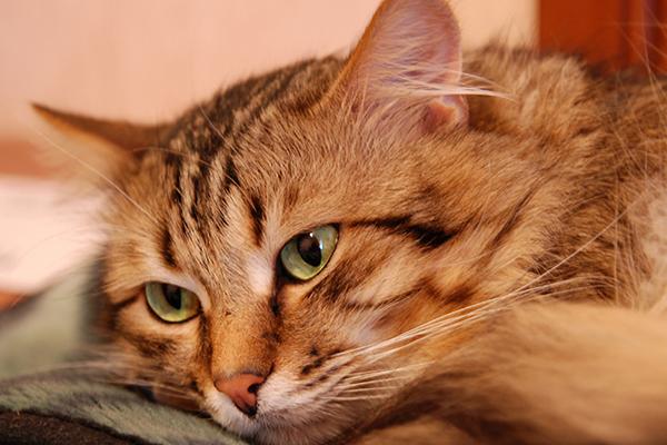gatos te vuelven loco 4