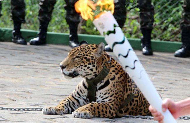 juegos-olimpicos-carab1