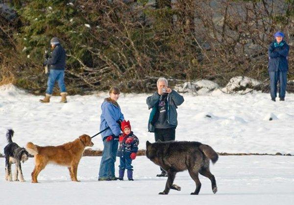 lobo conoce perro 5