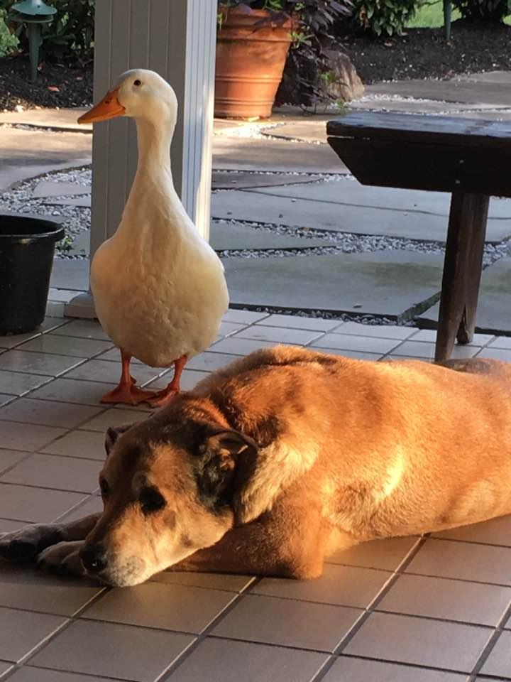 pato y perro 2