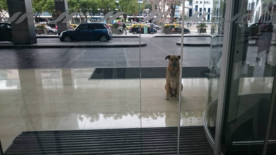 perro-azafata-adopcion
