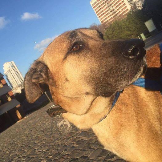 perro-azafata-adopcion2