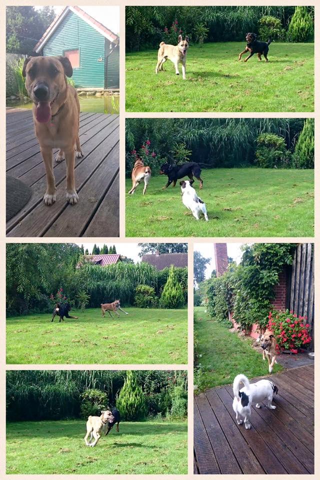 perro-azafata-adopcion3