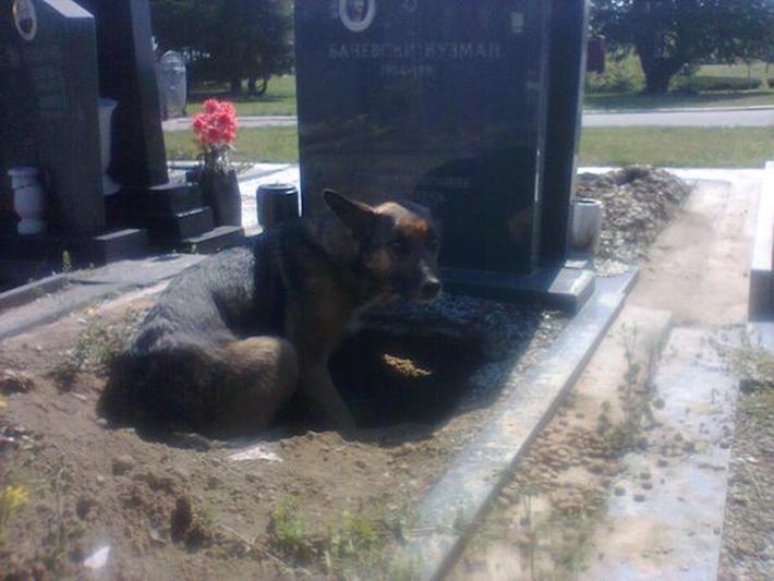 perro en tumba 2