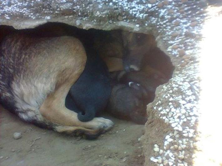 perro en tumba 3