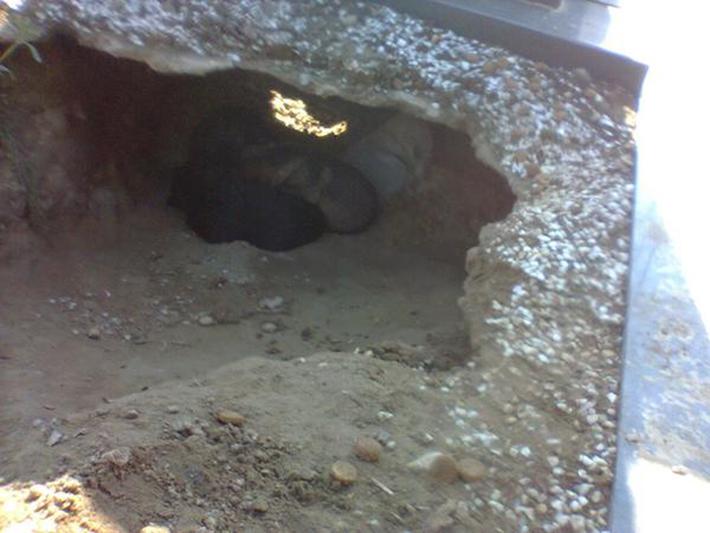 perro en tumba 4