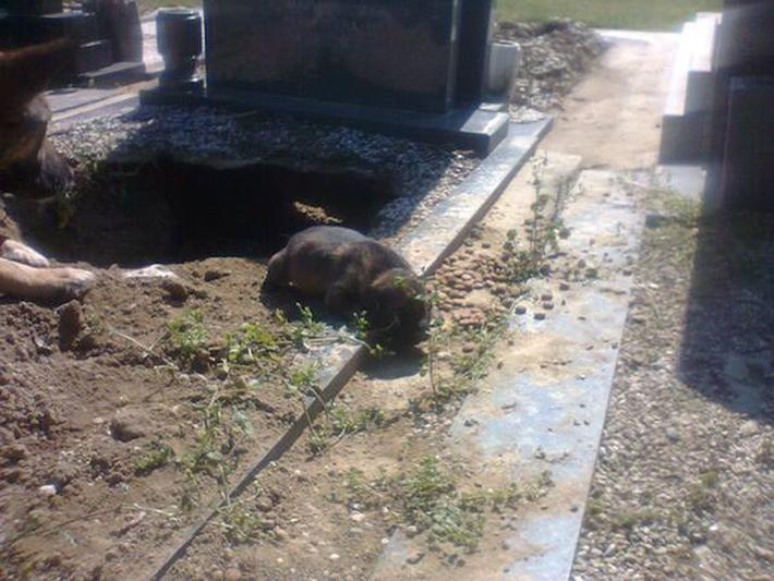 perro en tumba 5