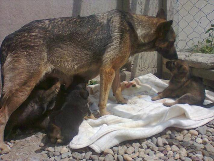 perro en tumba 9