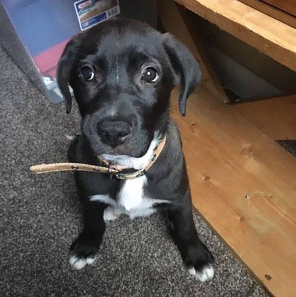perro-encontrado-bolsa4