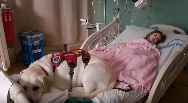 perro-heroe-diabetes3