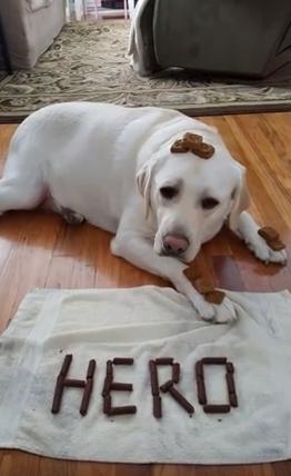 perro-heroe-diabetes6