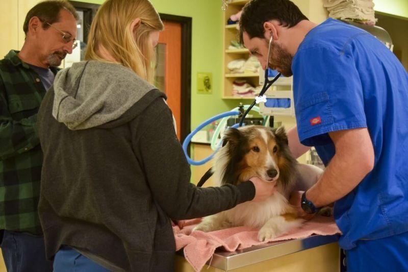 perro-salvado-eutanasia3