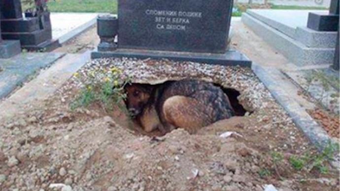 perro-tumba