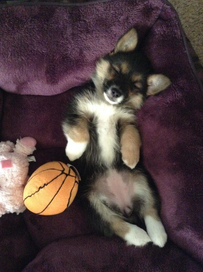 perros-rescatados-felices1