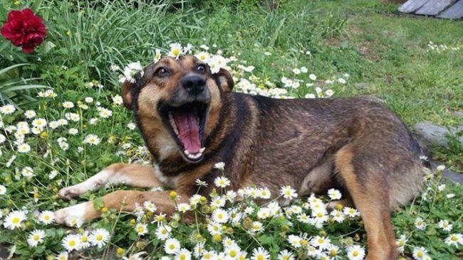 perros-rescatados-felices10