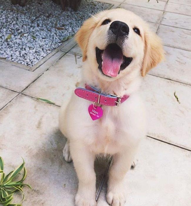 perros-rescatados-felices15