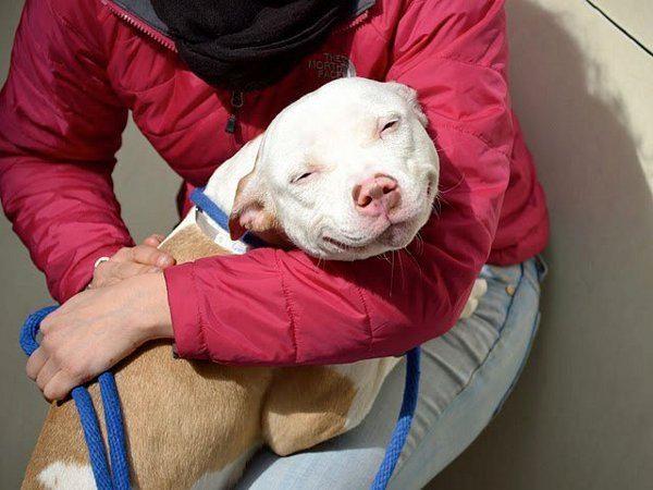 perros-rescatados-felices18