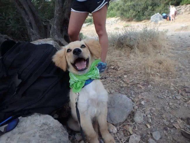 perros-rescatados-felices2