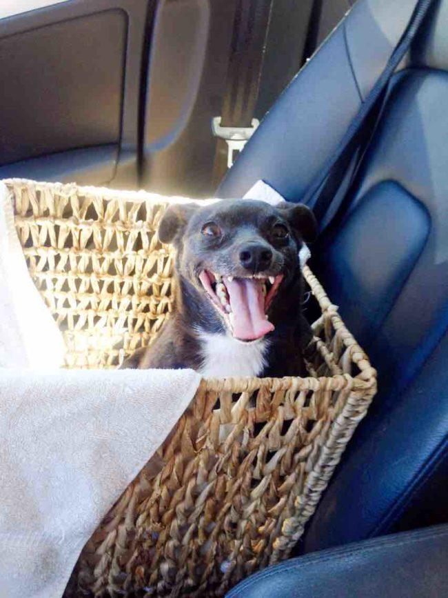 perros-rescatados-felices20