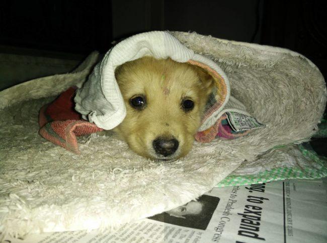 perros-rescatados-felices3