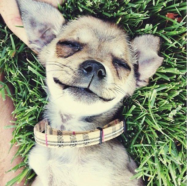 perros-rescatados-felices6