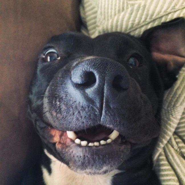 perros-rescatados-felices7