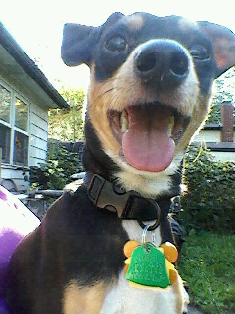 perros-rescatados-felices8