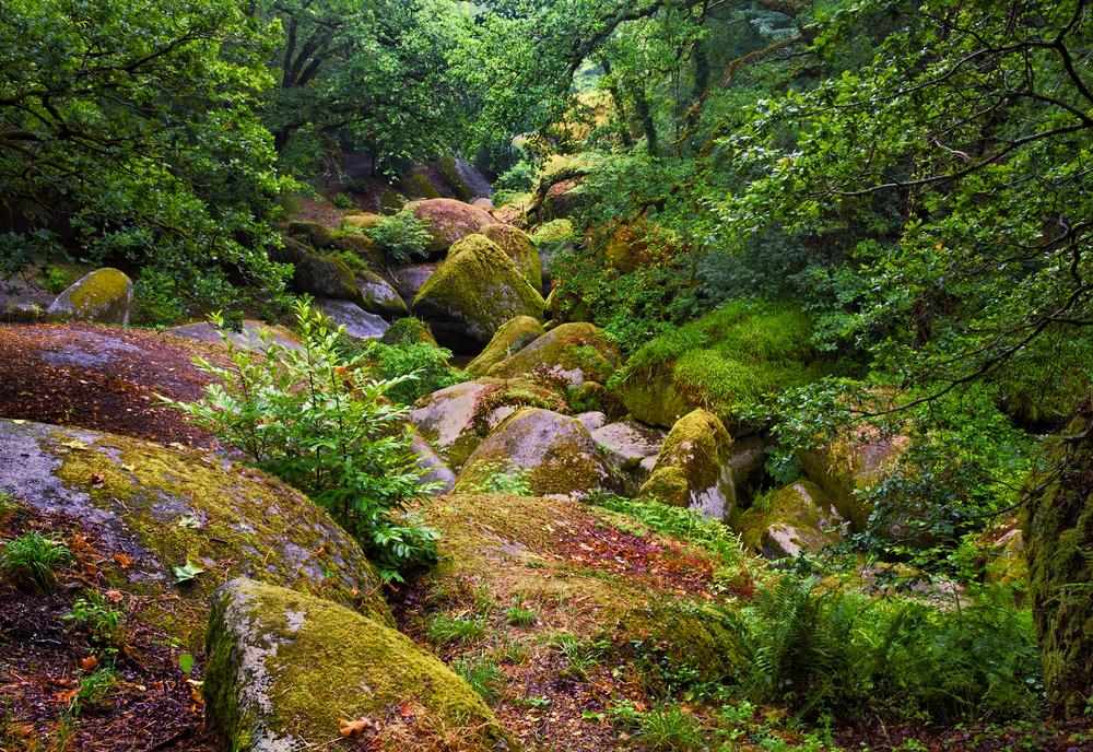 La roca de 137 toneladas que cualquiera puede mover y otras curiosidades del bosque de Huelgoat Huelgoat-foto-1