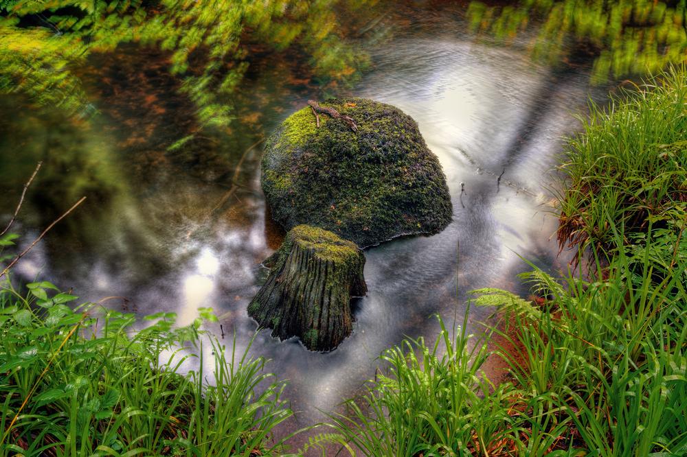 La roca de 137 toneladas que cualquiera puede mover y otras curiosidades del bosque de Huelgoat Huelgoat-foto-5