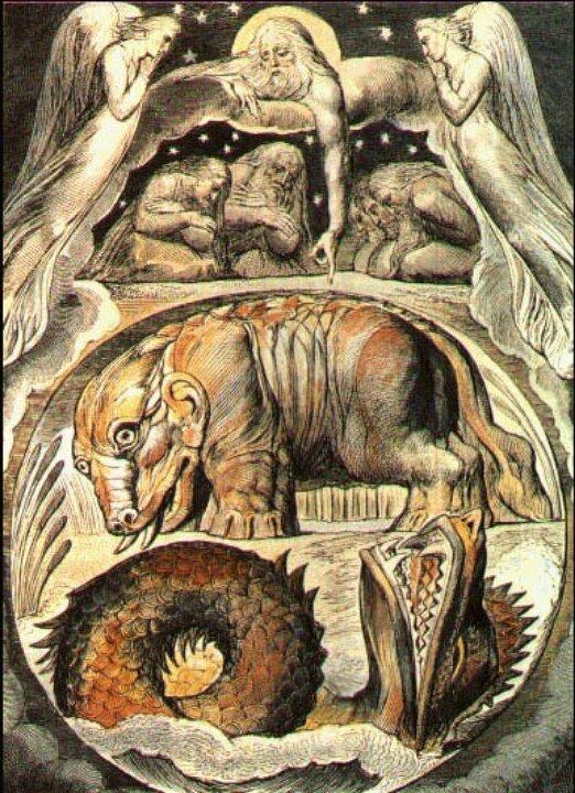 asi dibujaban en la edad media animales qu eno habian visto nunca 4