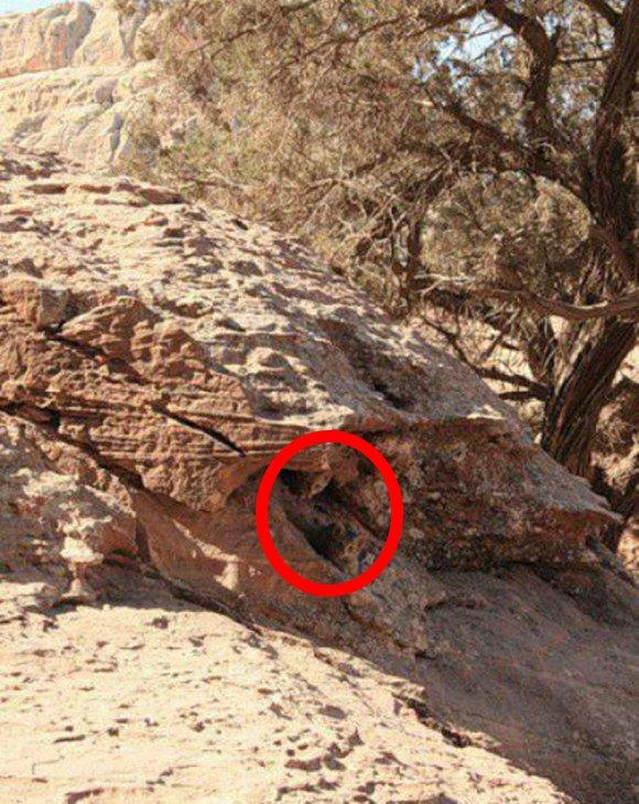 felinos camuflados solucion