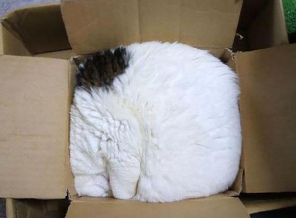 gatos-dormidos1