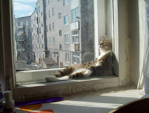 gatos-dormidos10