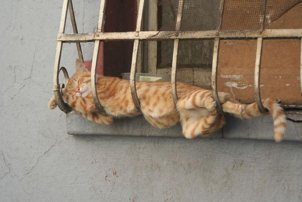 gatos-dormidos11