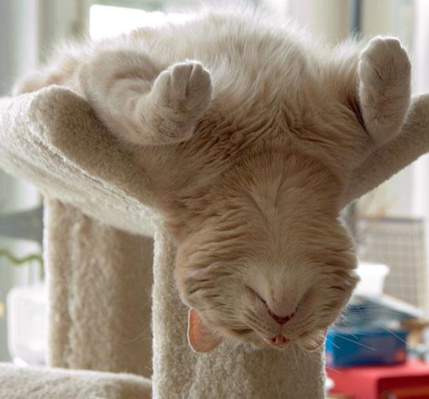 gatos-dormidos13