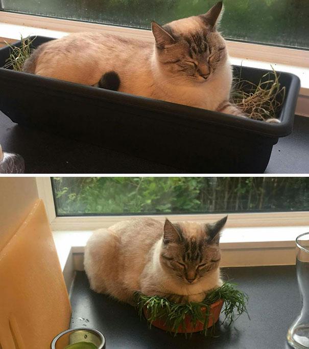 gatos-dormidos15