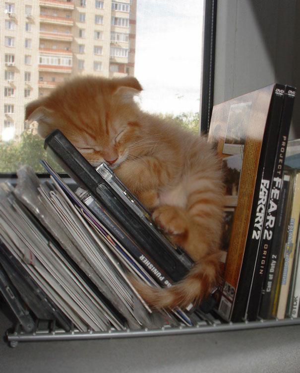 gatos-dormidos16