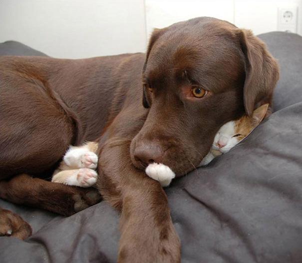 gatos-dormidos17