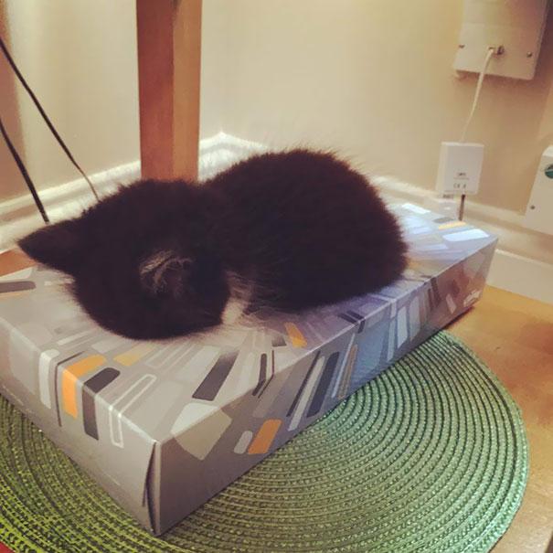 gatos-dormidos18